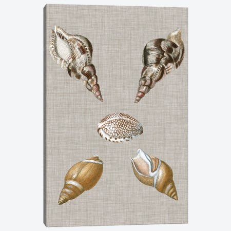 Shells On Linen IV Canvas Print #VSN126} by Vision Studio Canvas Artwork