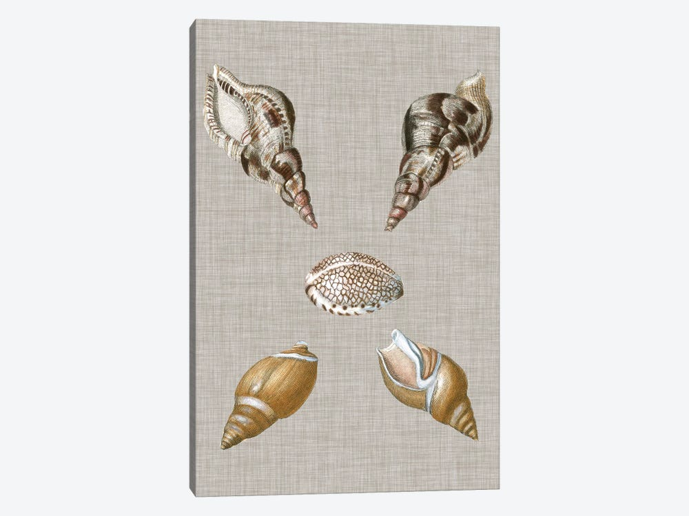 Shells On Linen IV by Vision Studio 1-piece Canvas Artwork