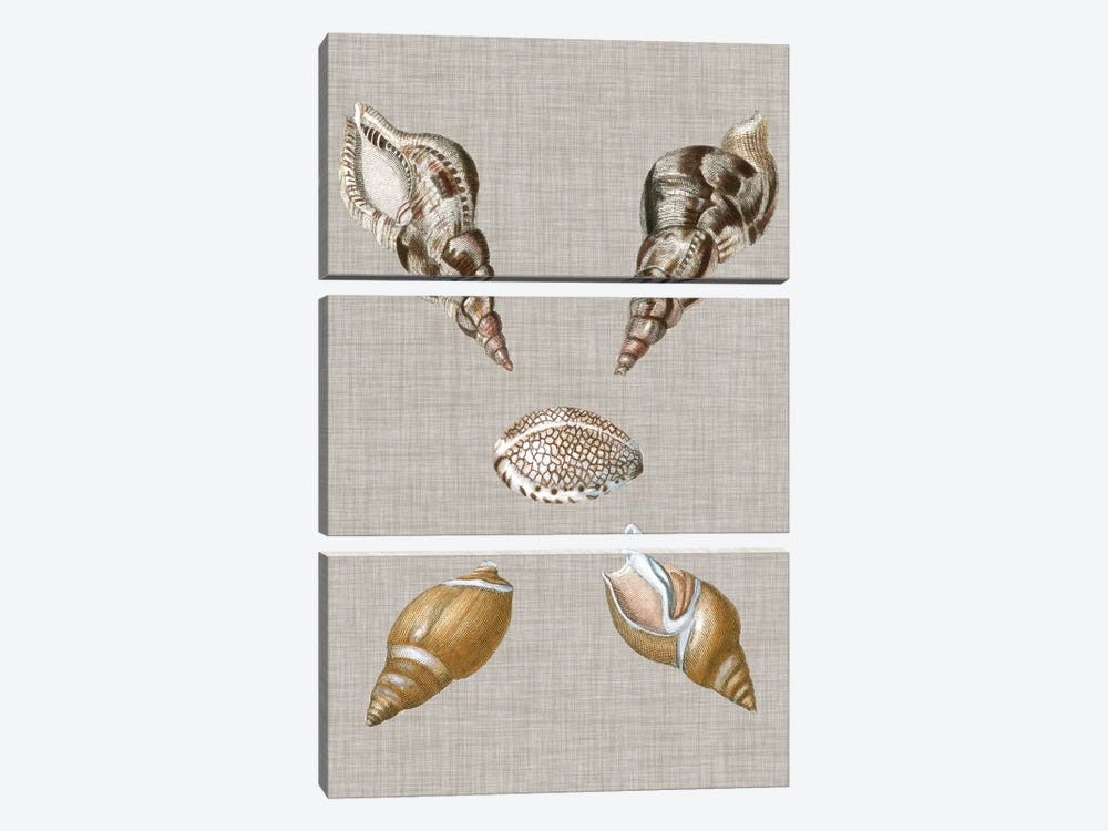 Shells On Linen IV by Vision Studio 3-piece Canvas Artwork