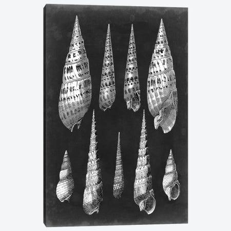 Alabaster Shells II Canvas Print #VSN132} by Vision Studio Canvas Wall Art