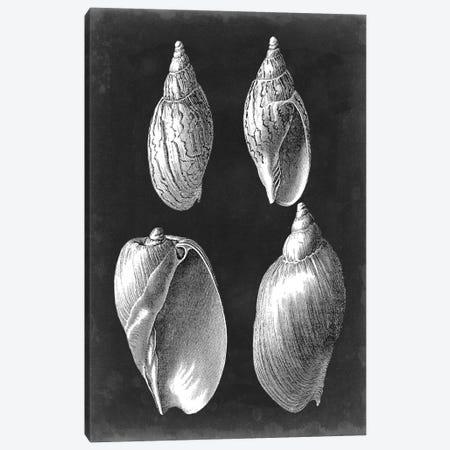 Alabaster Shells III Canvas Print #VSN133} by Vision Studio Canvas Art