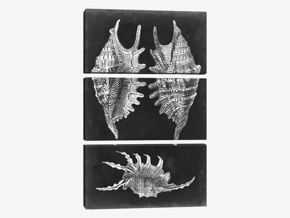 Alabaster Shells V 3-piece Canvas Art