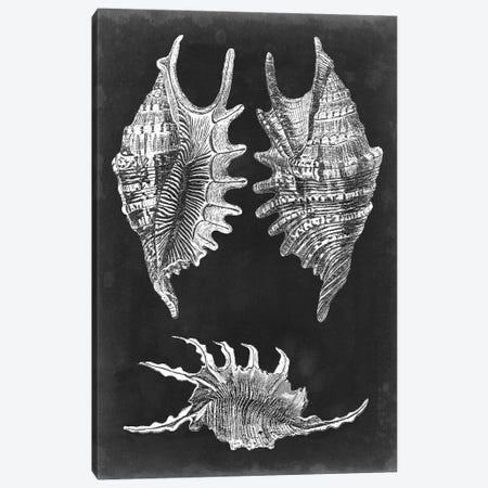 Alabaster Shells V Canvas Print #VSN135} by Vision Studio Canvas Art Print