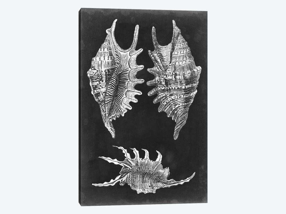 Alabaster Shells V by Vision Studio 1-piece Canvas Artwork
