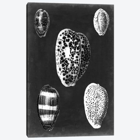 Alabaster Shells VI Canvas Print #VSN136} by Vision Studio Art Print