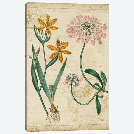 Botanical Repertoire I Canvas Print #VSN15} by Vision Studio Canvas Art