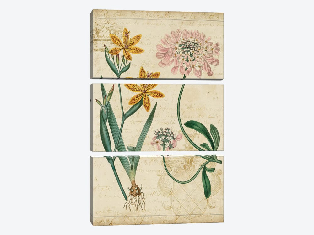 Botanical Repertoire I by Vision Studio 3-piece Canvas Art