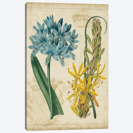 Botanical Repertoire II Canvas Print #VSN16} by Vision Studio Canvas Art