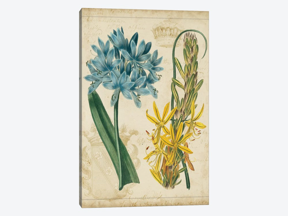 Botanical Repertoire II by Vision Studio 1-piece Art Print
