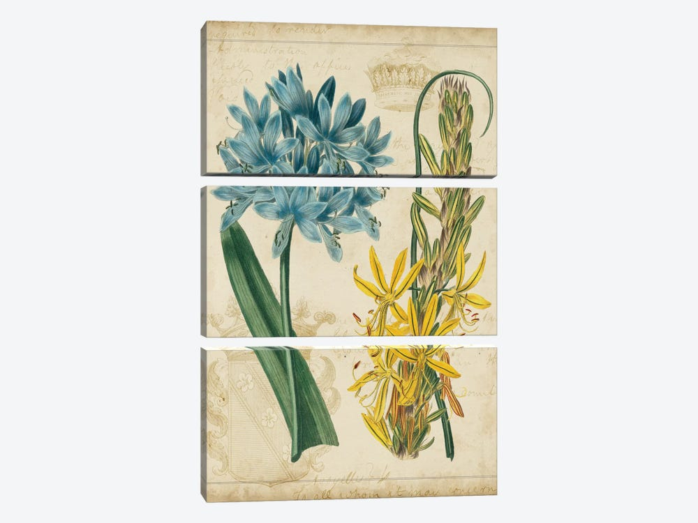 Botanical Repertoire II by Vision Studio 3-piece Canvas Print