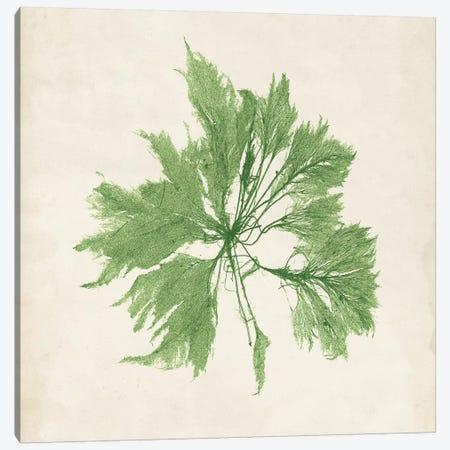 Peridot Seaweed I Canvas Print #VSN189} by Vision Studio Art Print