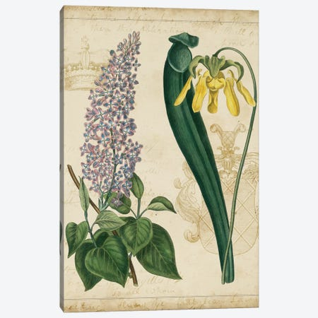 Botanical Repertoire IV Canvas Print #VSN18} by Vision Studio Canvas Print