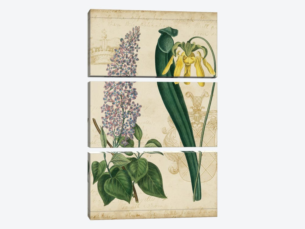 Botanical Repertoire IV by Vision Studio 3-piece Art Print