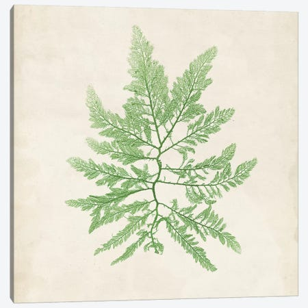 Peridot Seaweed II Canvas Print #VSN190} by Vision Studio Canvas Wall Art