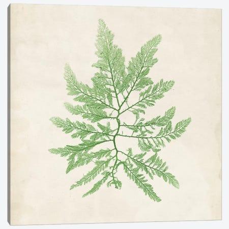 Peridot Seaweed II Canvas Print #VSN190} by Vision Studio Canvas Wall Art