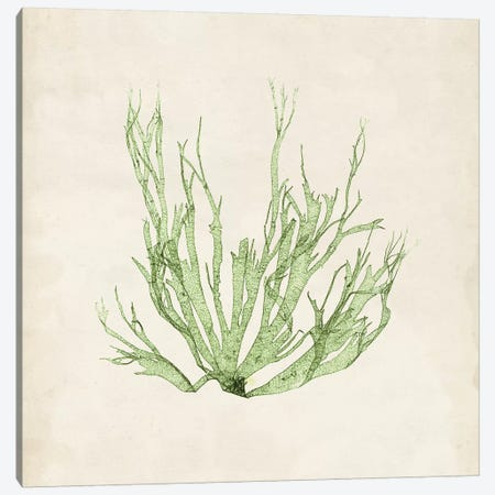 Peridot Seaweed IV Canvas Print #VSN192} by Vision Studio Canvas Wall Art