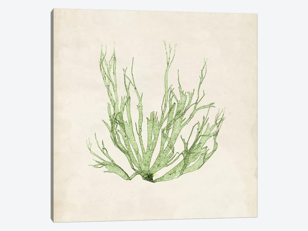 Peridot Seaweed IV by Vision Studio 1-piece Canvas Print