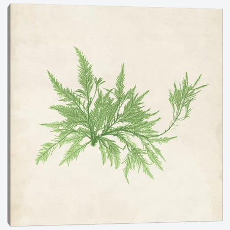 Peridot Seaweed V Canvas Print #VSN193} by Vision Studio Canvas Artwork