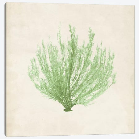 Peridot Seaweed VI Canvas Print #VSN194} by Vision Studio Canvas Print