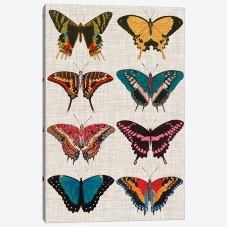 Polychrome Butterflies I Canvas Print #VSN195} by Vision Studio Canvas Print