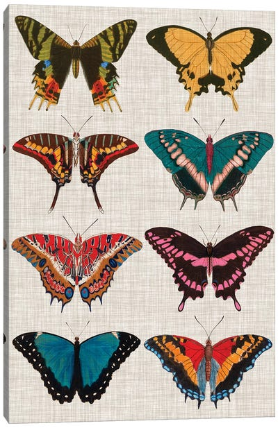 Polychrome Butterflies I by Vision Studio Canvas Art Print