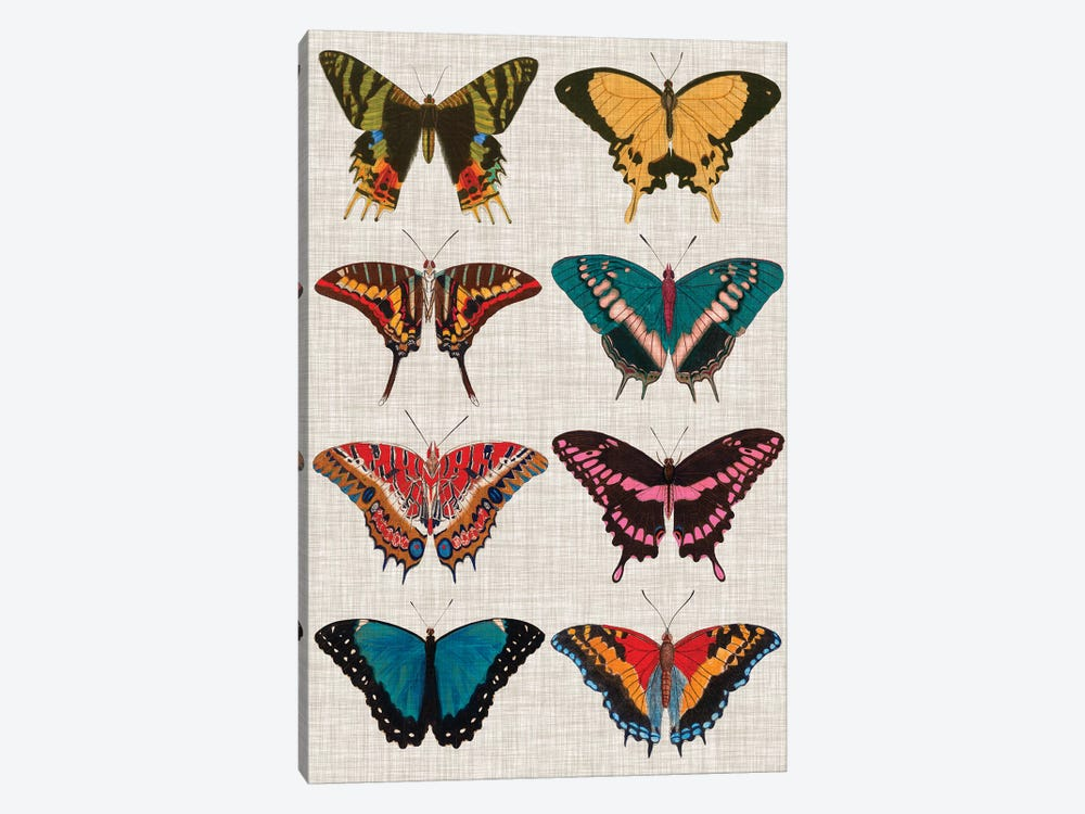 Polychrome Butterflies I by Vision Studio 1-piece Canvas Wall Art