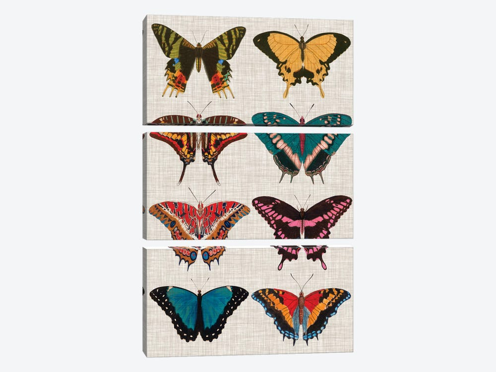 Polychrome Butterflies I by Vision Studio 3-piece Canvas Art