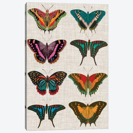 Polychrome Butterflies II Canvas Print #VSN196} by Vision Studio Art Print