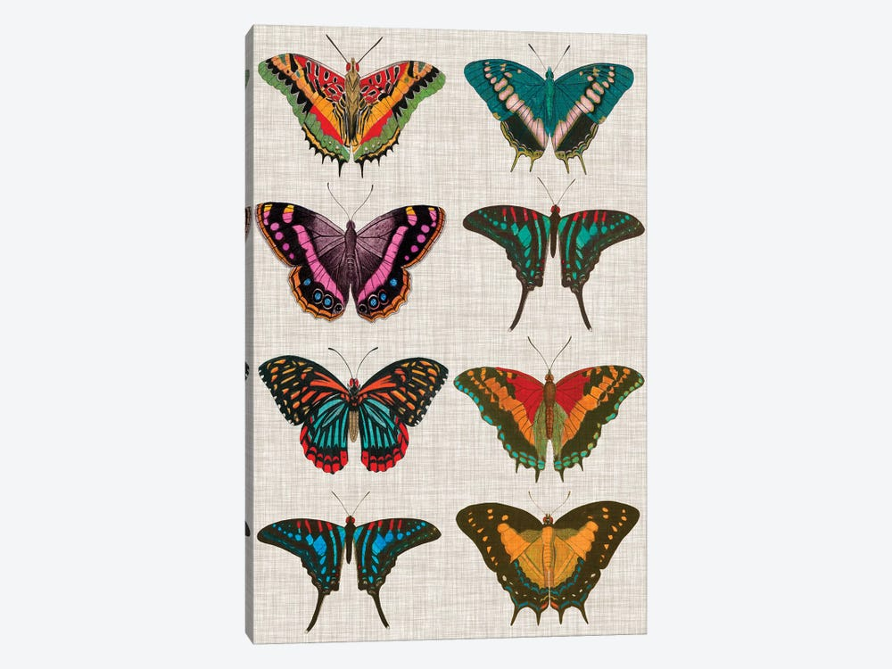 Polychrome Butterflies II by Vision Studio 1-piece Canvas Print