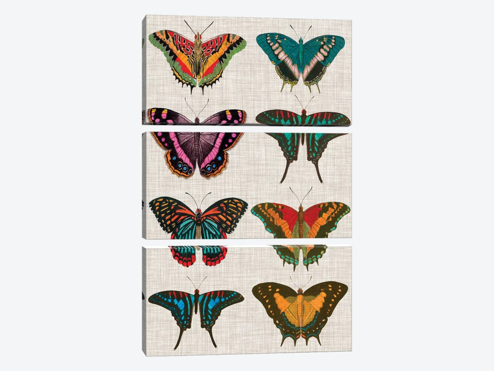 Polychrome Butterflies II by Vision Studio 3-piece Canvas Print