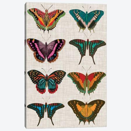 Polychrome Butterflies II Canvas Print #VSN196} by Vision Studio Art Print