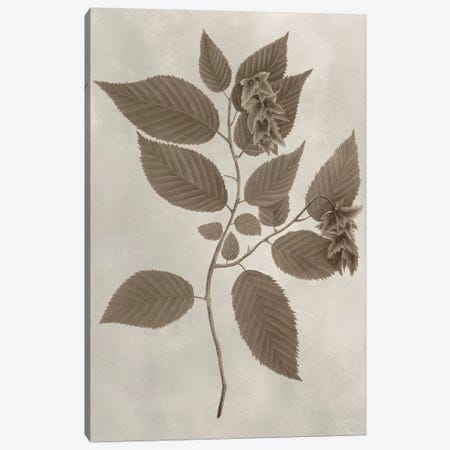 Arbor Specimen II Canvas Print #VSN201} by Vision Studio Canvas Wall Art