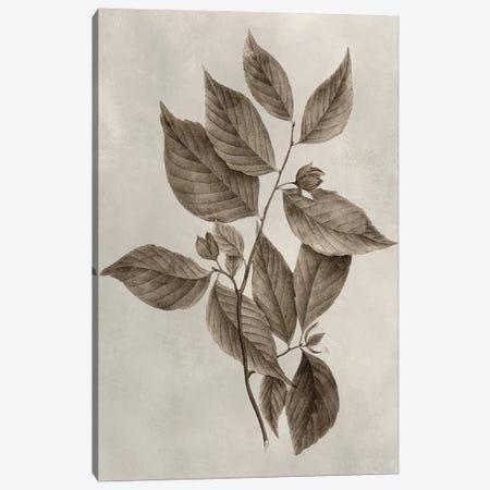 Arbor Specimen III Canvas Print #VSN202} by Vision Studio Canvas Artwork