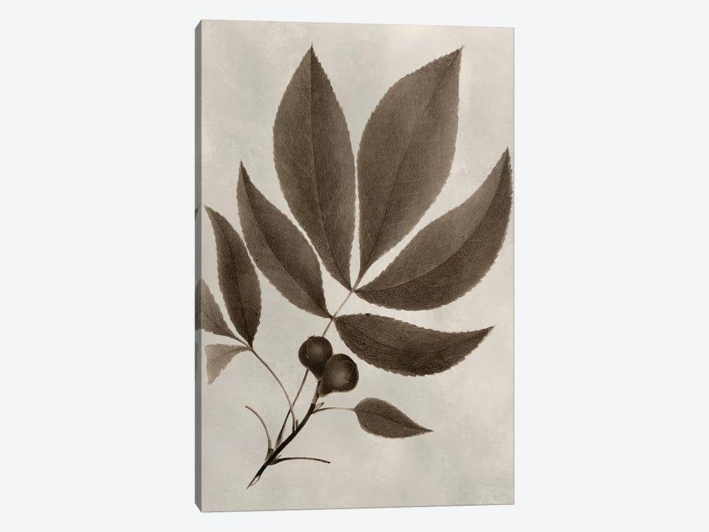 Arbor Specimen V by Vision Studio 1-piece Canvas Art