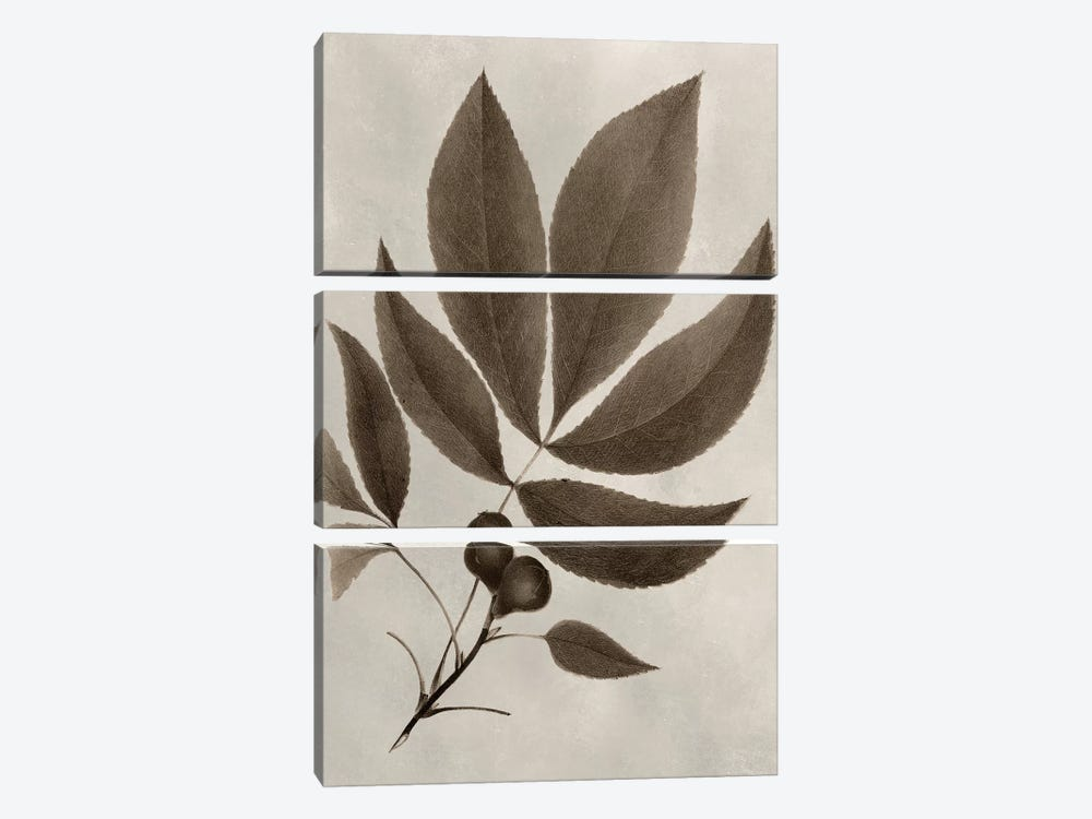 Arbor Specimen V by Vision Studio 3-piece Canvas Art