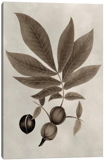 Arbor Specimen VI Canvas Art Print