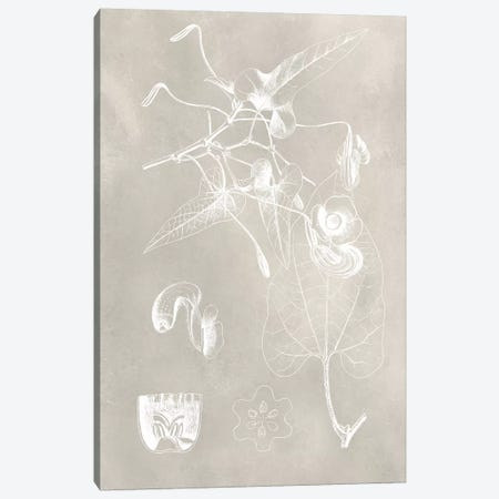 Botanical Schematic I Canvas Print #VSN209} by Vision Studio Canvas Artwork