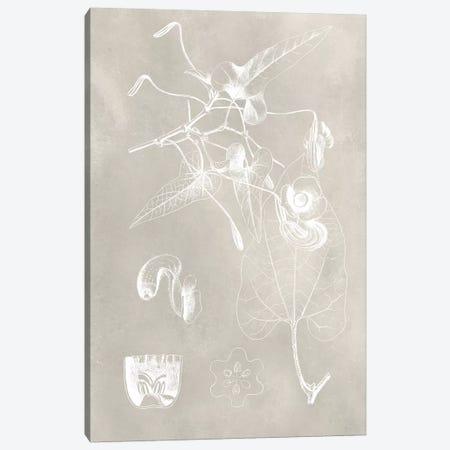 Botanical Schematic I Canvas Print #VSN209} by Vision Studio Canvas Artwork