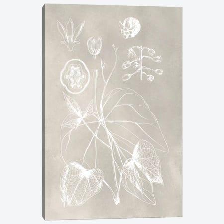 Botanical Schematic II Canvas Print #VSN210} by Vision Studio Canvas Print