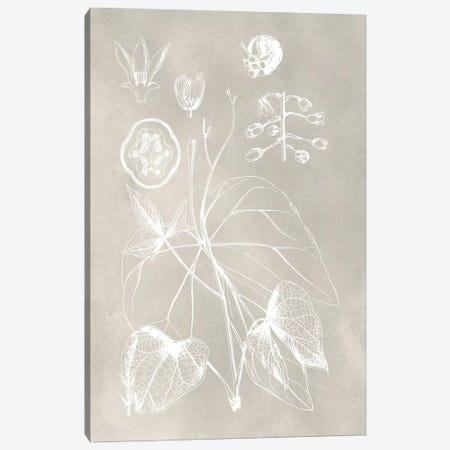 Botanical Schematic II Canvas Print #VSN210} by Vision Studio Canvas Print