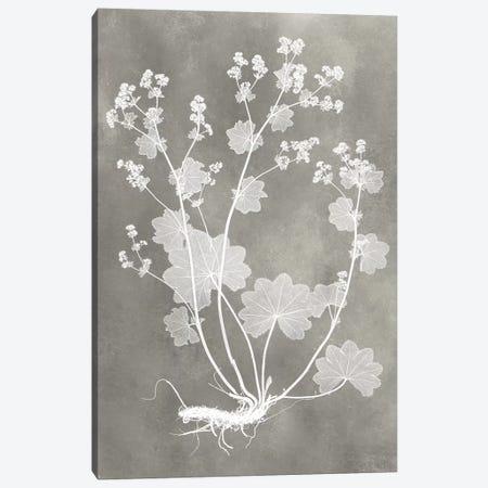 Herbarium Study I Canvas Print #VSN213} by Vision Studio Art Print