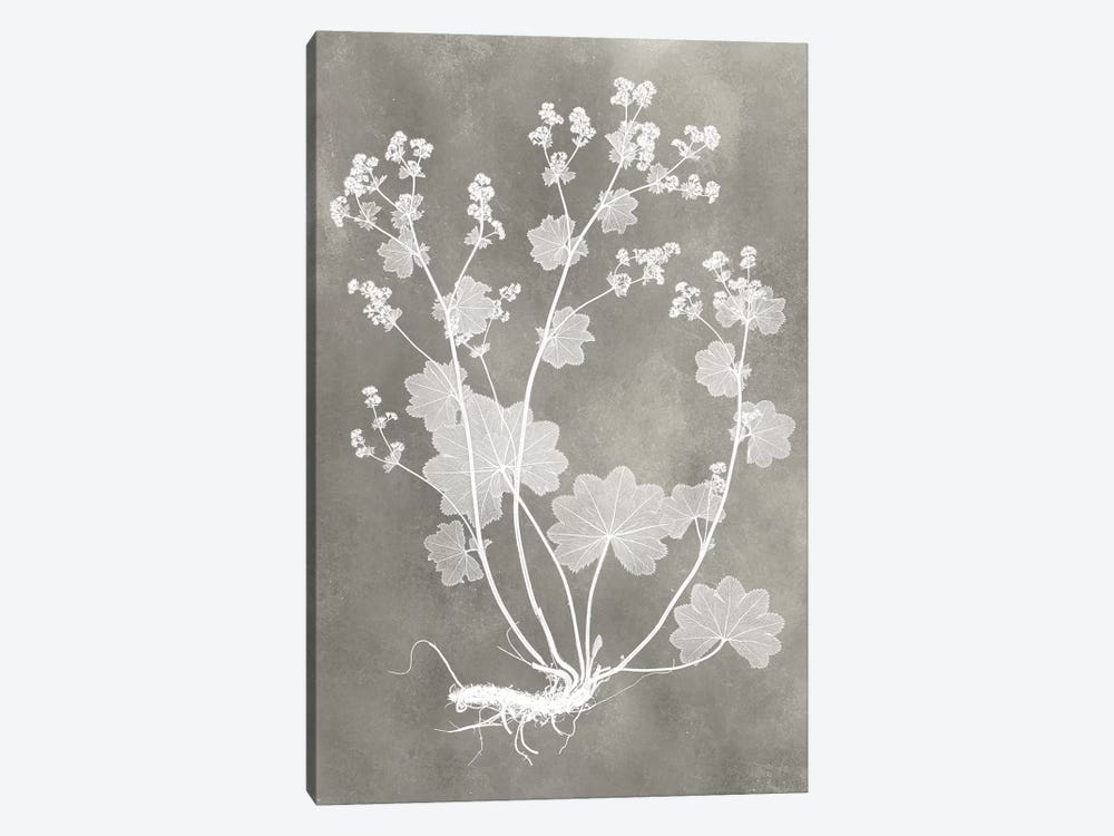 Herbarium Study I by Vision Studio 1-piece Canvas Artwork