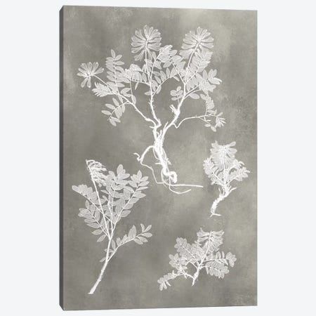 Herbarium Study II Canvas Print #VSN214} by Vision Studio Canvas Wall Art