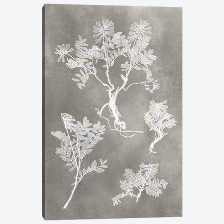 Herbarium Study II Canvas Print #VSN214} by Vision Studio Canvas Wall Art