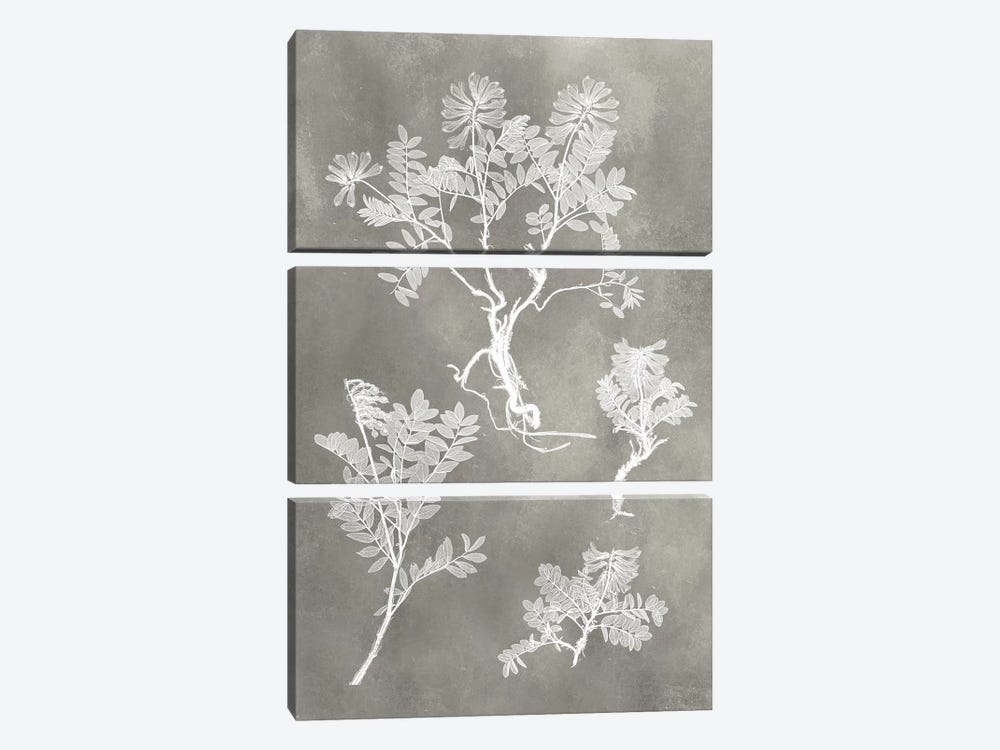 Herbarium Study II by Vision Studio 3-piece Canvas Art Print