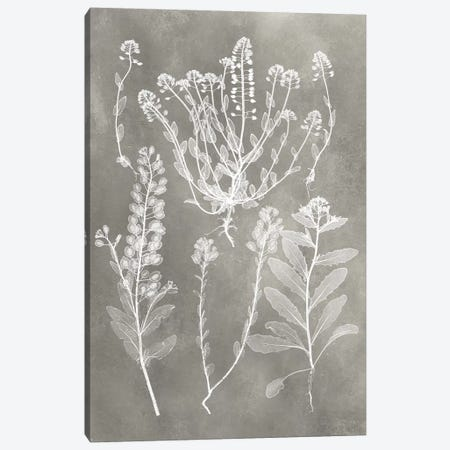 Herbarium Study III Canvas Print #VSN215} by Vision Studio Canvas Artwork