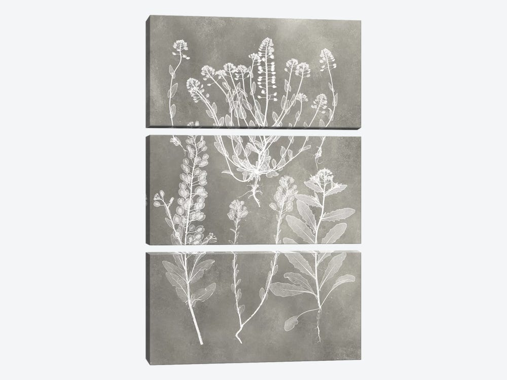 Herbarium Study III by Vision Studio 3-piece Canvas Art