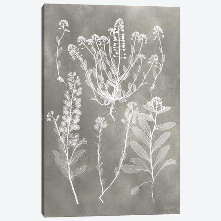 Herbarium Study III Canvas Print #VSN215} by Vision Studio Canvas Artwork