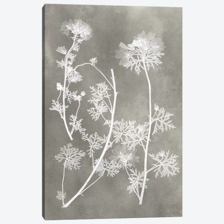 Herbarium Study IV Canvas Print #VSN216} by Vision Studio Canvas Artwork