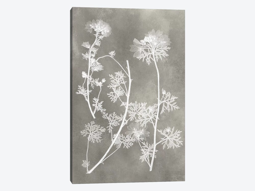 Herbarium Study IV by Vision Studio 1-piece Canvas Print